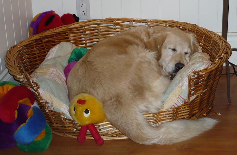 Madison resting